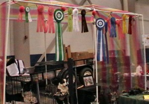 Our family won so many ribbons -- we hung them on the rainbow canopy